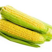 Семена кукурузы Екселент 2500 сем. Lark seeds.