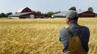 Сельхозпроизводители засеяли яровыми и зернобобовыми культурами 82% гектаров земли