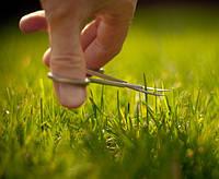 Уход за зелеными насаждениями и газоном
