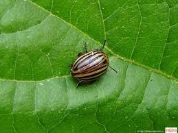 Инсектициды от насекомых-вредителей