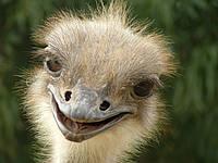 Тур на страусиную ферму из Николаева. Отдых на природе, фото 1