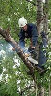 Расчистка участка от деревьев. Удаление пней. Вырубка деревьев