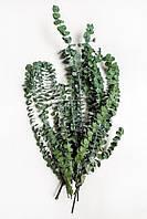 Бэби Блю (зеленый)