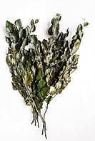Фагус (зеленый)