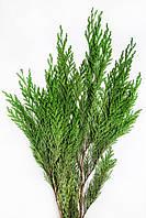 Туя ветви 30/60 см зеленый