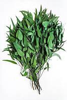 Пендула эвкалипт( зеленый) навал 2,5 кг