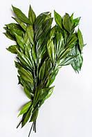 Кокулус (зеленый)