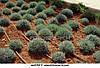 """Капельный полив набор """"Садовод - 100"""", капельный полив для большого урожая, фото 3"""