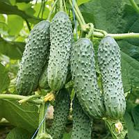Семена огурца ZKI - 104 F1 1000 семян Lark Seeds