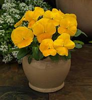 Фиалка рогатая Grandissimo Clear Yellow F1, Sakata 1 000 семян