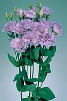 Роза (Эустома) Echo Lavender F1, Sakata 1 000 драже