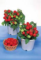 Томат декоративный Red Robin GSPP F1, Sakata 1 000 семян