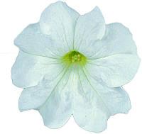 Петуния крупноцветковая Eagle White F1, Sakata 1 000 семян