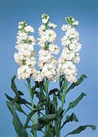 Маттиола(левкой) cheerful white, sakata 1 000 семян