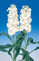 Маттиола(левкой) mid cheerful white, sakata 1 000 семян