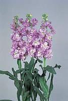 Маттиола(левкой) vivas deep lavender, sakata 1 000 семян