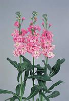 Маттиола(левкой) vivas light pink, sakata 1 000 семян
