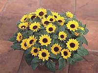 Подсолнечник декоративный sunbright, sakata  1 000 семян