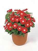 Барвинок розовый Victory Apricot, Sakata 1 000 семян