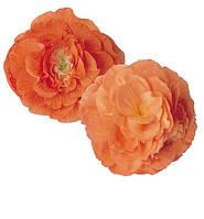 Бегония клубневая Fortune Apricot Orange Shades F1, Sakata 1 000 драже