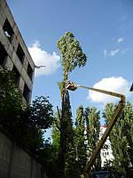 Спиливание деревьев (044) 531 55 41