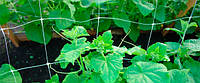 Сетка шпалерная / огуречная / сітка шпалерна 1,7х500м (яч.15х17см) зелена, рулон / Іспанія