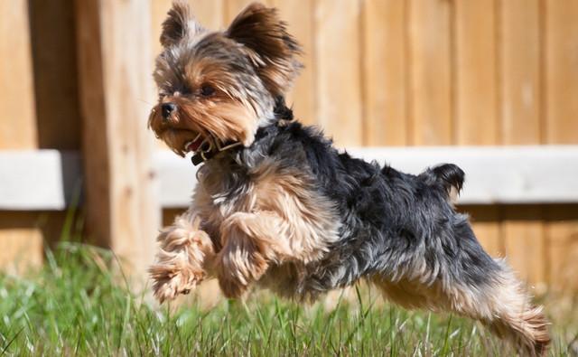 Корм для собак мини-пород Royal Canin Mini Adult