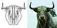 Голова быка, 400 мм, фанера, фото 3