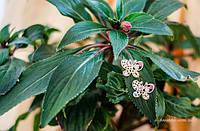 Сережки Веселі метелики