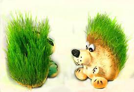 Травянчик Ёжик-1