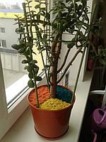 Декоративне кольорове покриття (присипка, мульча) для кімнатних рослин + добриво (декоративная присыпка) 1л