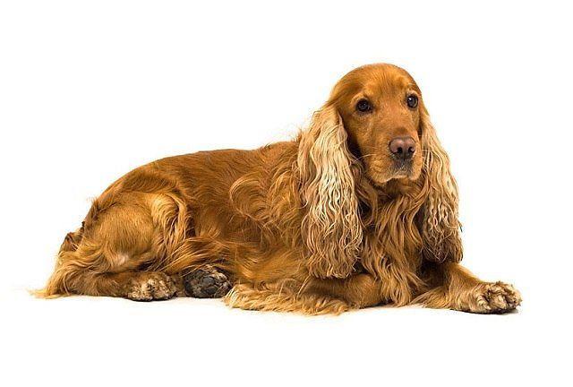 Корм для пожилых собак средних пород Royal Canin Medium Adult 7+