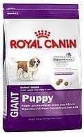 Корм для щенков гигантских пород Royal Canin Giant Puppy