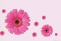 Наклейка виниловая Герберы розовые 3D декор