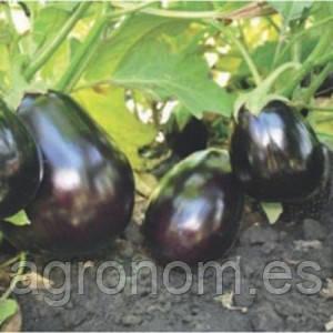 Насіння баклажана Валізу F1 1000 насінин Lark Seeds