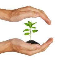 Засоби захисту рослин (пестициди)
