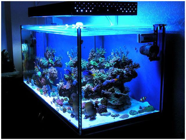 Освітлення акваріума