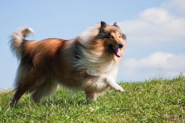 Расчёска с вращающимися зубьями для собак Ferplast GRO 5757 Premium