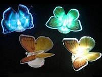 Светящаяся бабочка