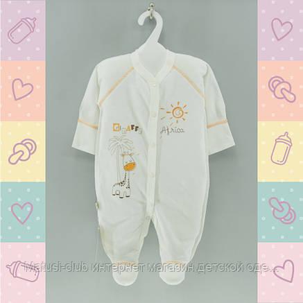 Человечки для новорожденных девочек,Хлопок-Кулир, 1432роз,  0-5 месяцев,В наличии_56_62,Рост, фото 2