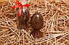 Яйцо Фаберже из шоколада в подарок для девушки