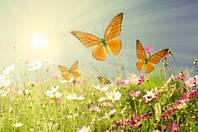 "Фотообои ""Бабочки над цветами"", Фактурная текстура (холст, иней, декоративная штукатурка)"