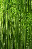 """Фотообои """"Бамбук"""""""