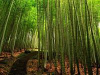 "Фотообои ""Бамбуковый лес"", Фактурная текстура (холст, иней, декоративная штукатурка)"