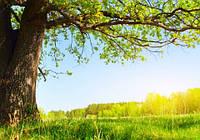 """Фотообои """"Дерево и трава"""", Фактурная текстура (холст, иней, декоративная штукатурка)"""