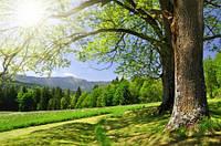 """Фотообои """"Деревья"""", Фактурная текстура (холст, иней, декоративная штукатурка)"""
