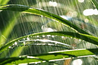 """Фотообои """"Дождь"""", Фактурная текстура (холст, иней, декоративная штукатурка)"""
