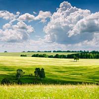 """Фотообои """"Зеленое поле"""", Фактурная текстура (холст, иней, декоративная штукатурка)"""