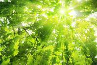 "Фотообои ""Лучи солнца 2"", Фактурная текстура (холст, иней, декоративная штукатурка)"