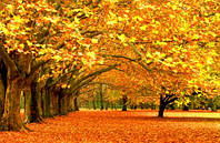 """Фотообои """"Осенние деревья"""", Фактурная текстура (холст, иней, декоративная штукатурка)"""